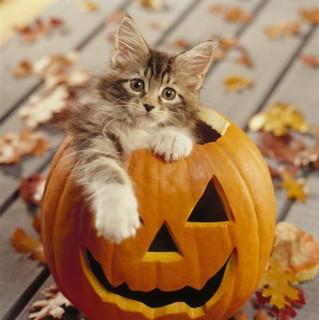 Festejamos Halloween?  Hagamos un poco de historia...................