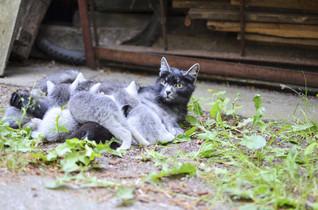 Esterilización temprana de perros y gatos. La gran esperanza.