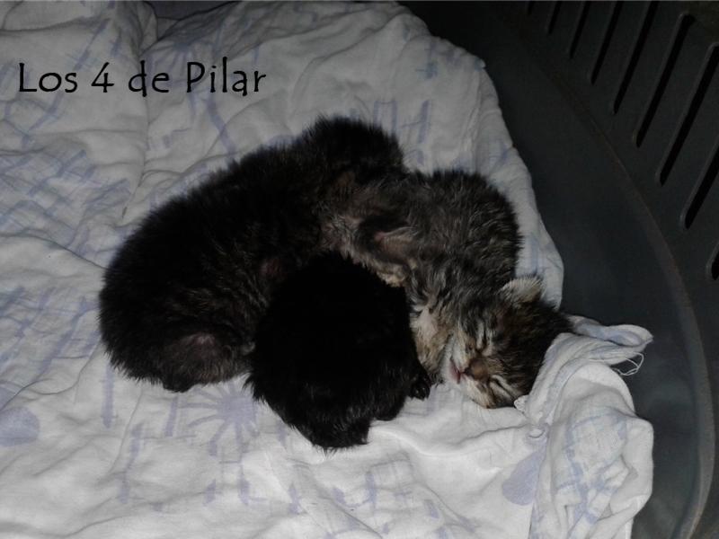 Los 4 de Pilar