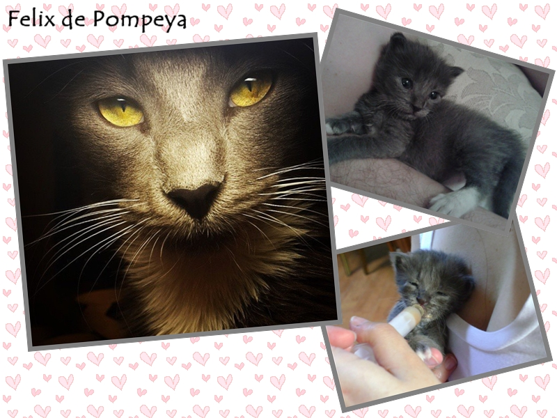 Felix de Pompeya
