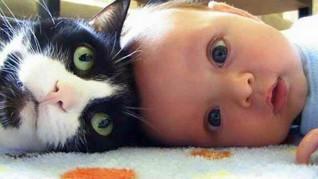 Gatos, bebes y mitos