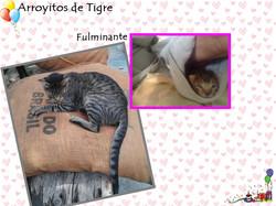Arroyitos de Tigre