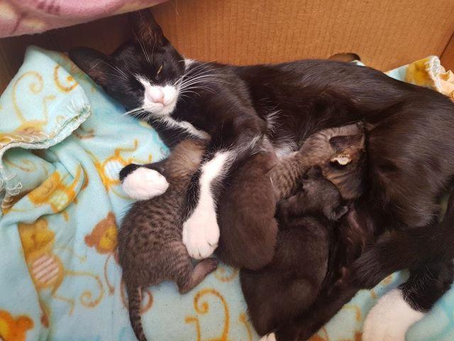 Bonita y sus bebes