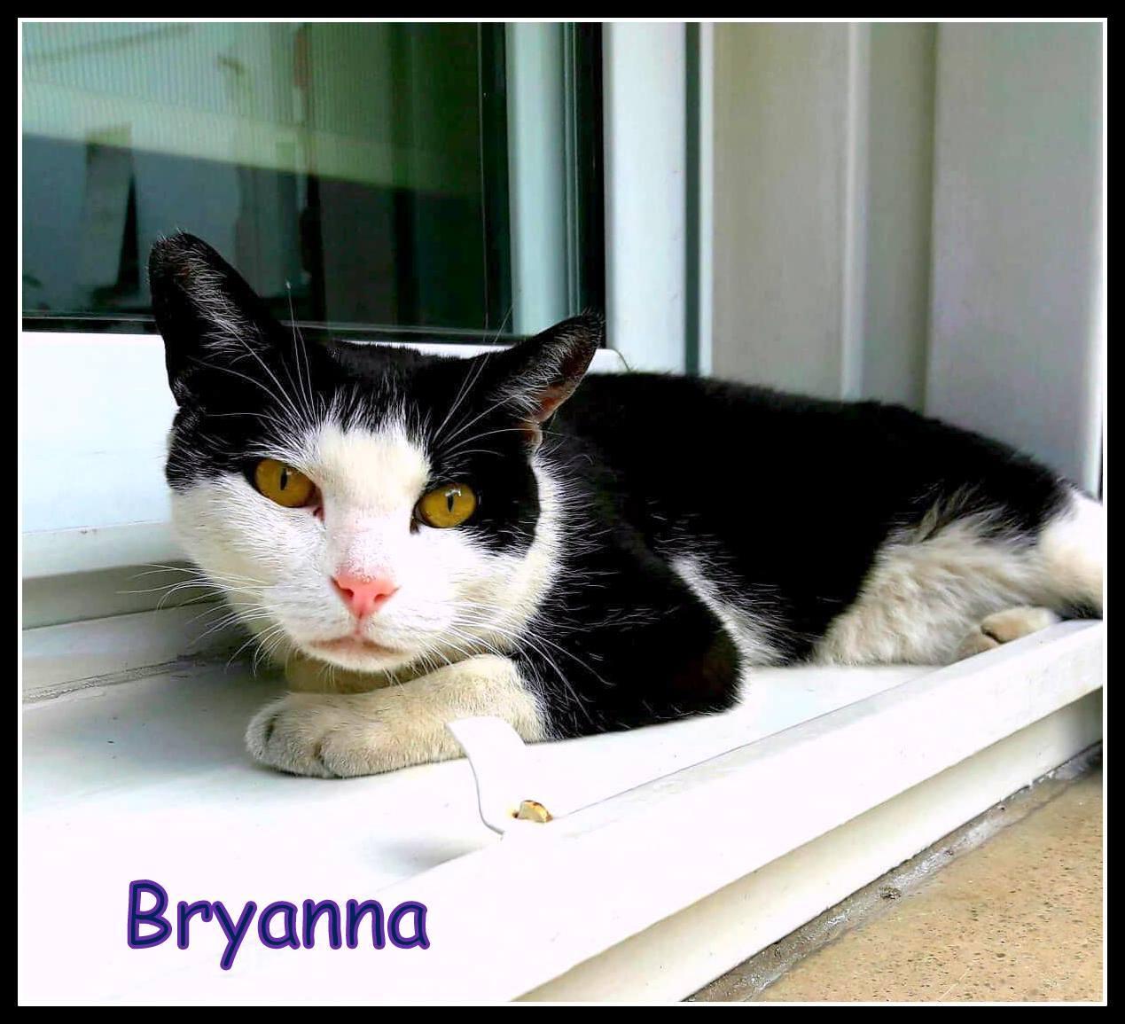 ADOPTADA - Bryanna