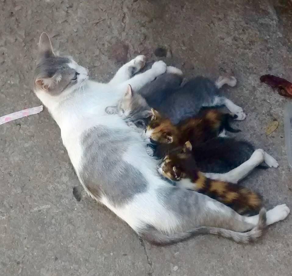 ADOPTADOS  - Fatima y sus bebes