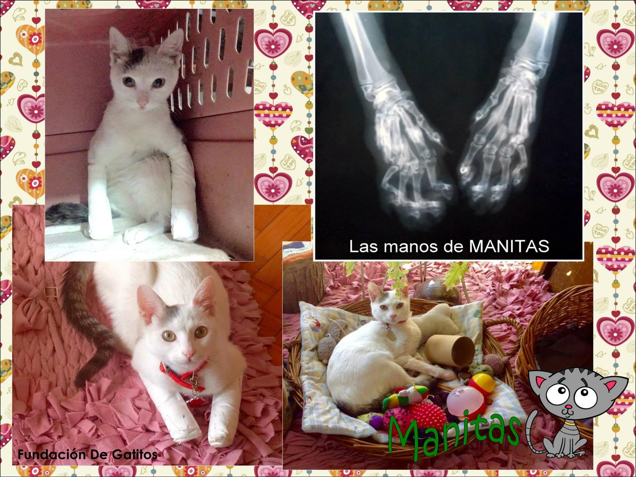 Manitas Makotta