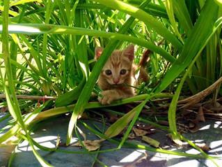 Gatos y el exterior
