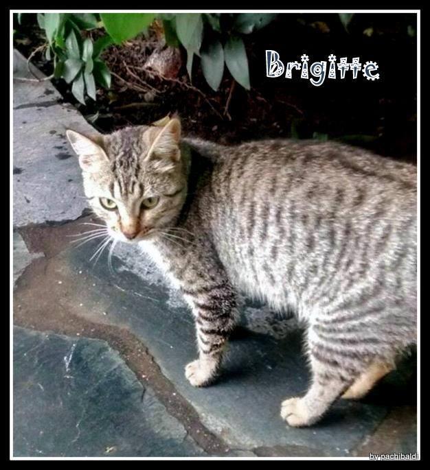ADOPTADA - Brigitte