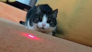 El PEOR juguete para tu gato