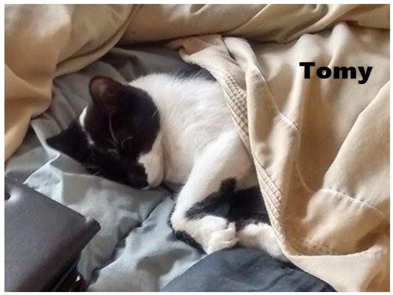 ADOPTADO - Tomy