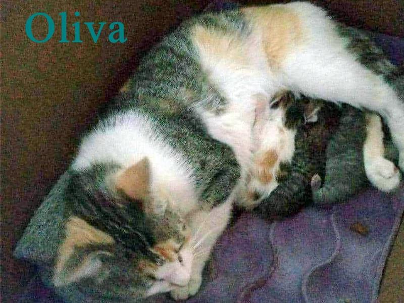 ADOPTADOS - Oliva y sus Oliveros