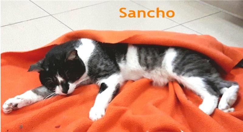 ADOPTADO - Sancho