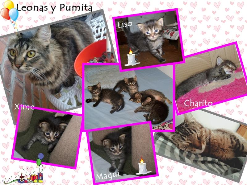 Leonas y Pumita