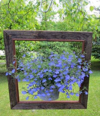 Flowers in Frame.jpg