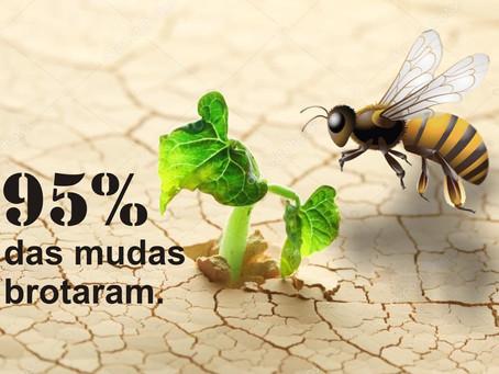 TURMALINA – PLANTIO DE MUDAS COM RESULTADO POSITIVO.