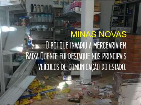 BOI FURIOSO CAUSA ESTRAGO EM MERCEARIA E FICA FAMOSO NA INTERNET.