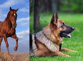 chien-chat-cheval-comportementaliste.jpg