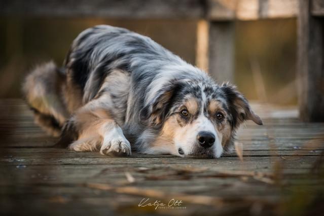 Fotografie Hund, Natur, Dog, Hund und Mensch, Bordercollie