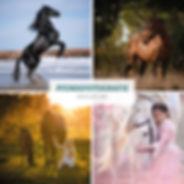 01-2020_Preisliste Pferde-web.jpg