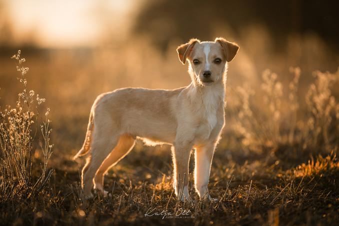 Fotografie Hund, Natur, Dog, Hund und Mensch, Straßenhund, Welpen