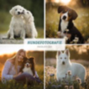 01-2020_Preisliste Hunde.jpg
