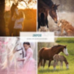 01-2019_Info-PDF_Pferde.jpg