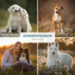 01-2019_Preisliste Hunde-Titelbild.jpg