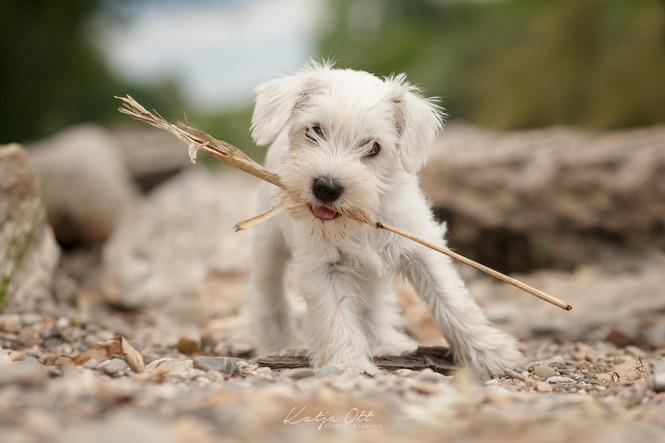 Fotografie Hund, Natur, Dog, Hund und Mensch, Welpe