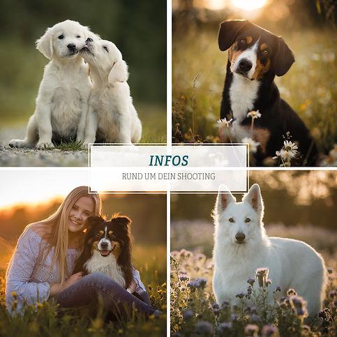 09_2020_Info-PDF_Hunde.jpg