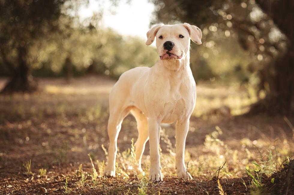 Fotografie Hund, Natur, Dog, Hund und Mensch, Dogo Agrentino