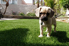 ToughLawn Artificial Grass Pet Turf