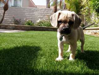 The Benefits Of Installing Artificial Grass For Dogs