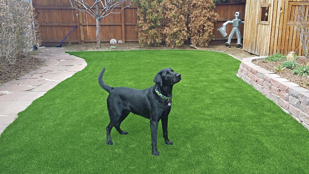 ToughLawn Artificial Grass, Artificial Turf, Austin Tx Synthetic Grass, Fake Grass