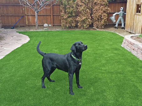 Artificial Pet Grass Is Great For Pets & Pet Owners
