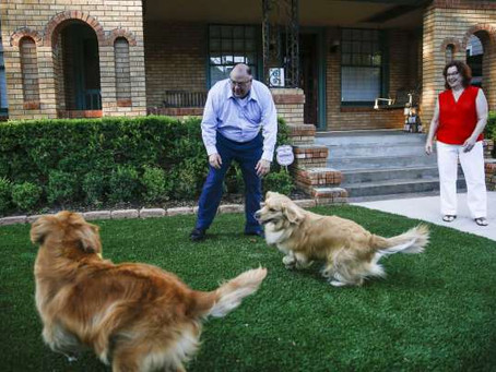 The 6 Benefits of Why Artificial Grass Is Good for Dogs