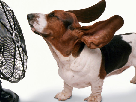 Top Reasons Why A/C is Becoming the Newest Hot Apartment Amenity