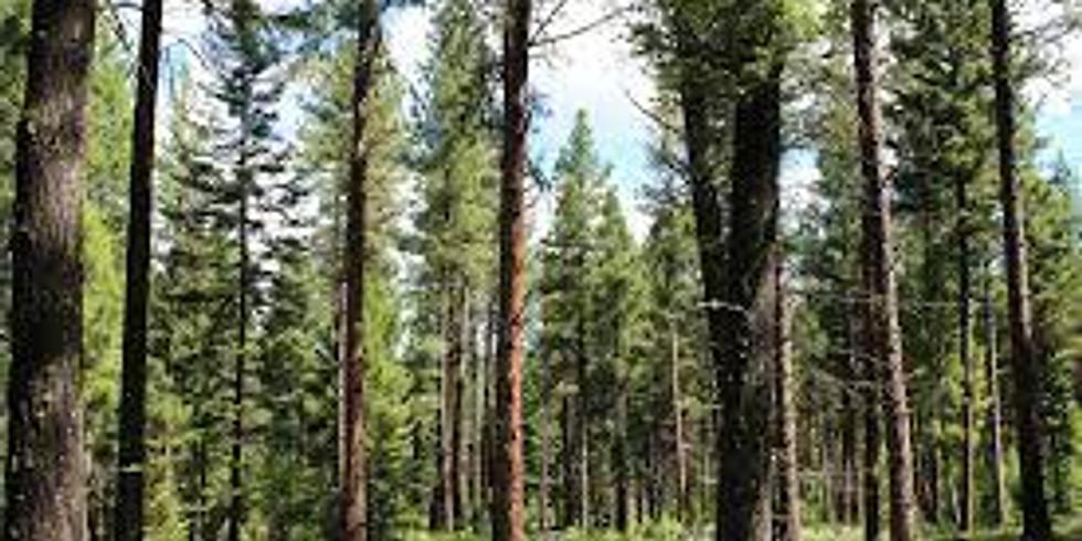 Lubrecht Experimental Forest