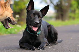 Inspecteur canin