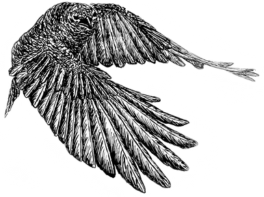 Flying%20Crow%203_edited.png