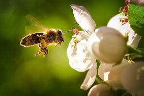 Flower & Bee.jpg