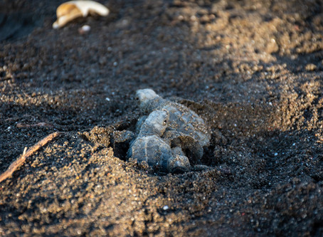 A Turtle's Journey, and what we can learn from it