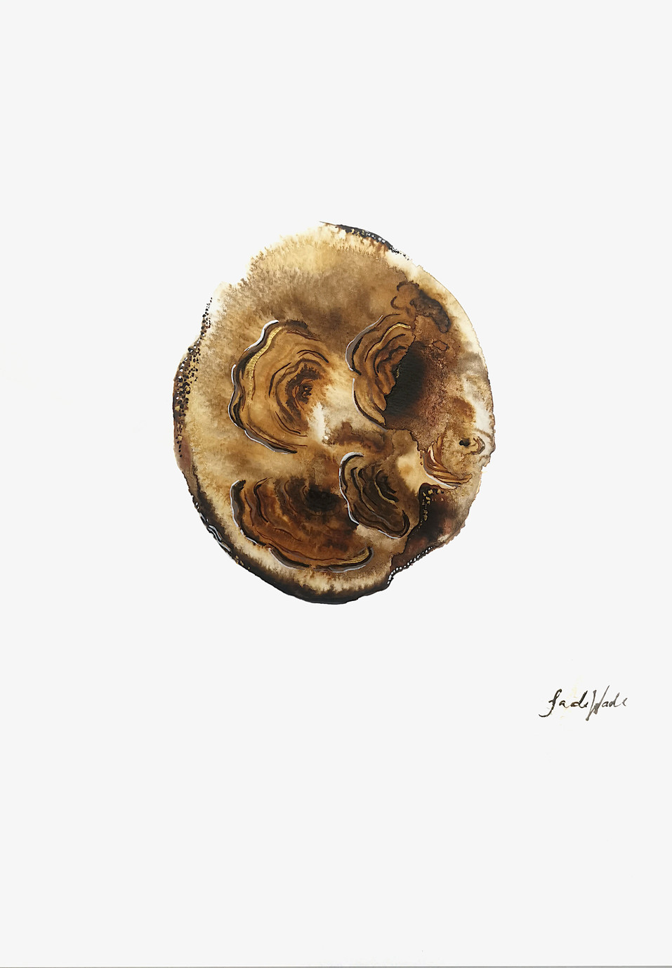 Turkey Tail .jpg