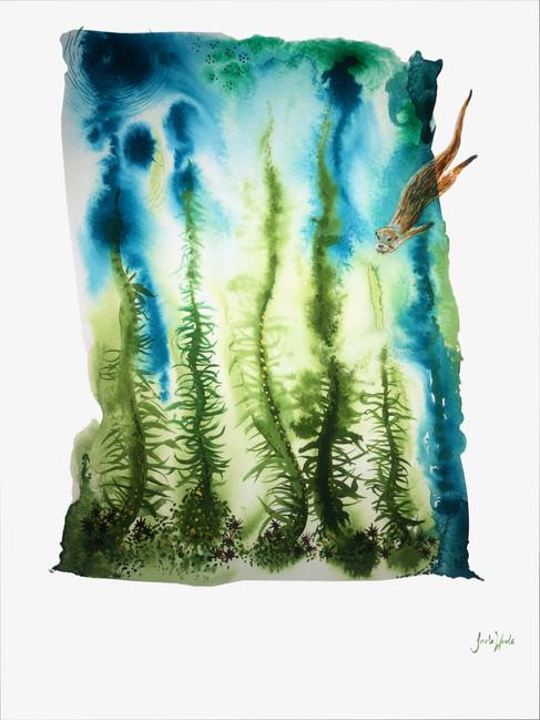 kelp forrest .jpg