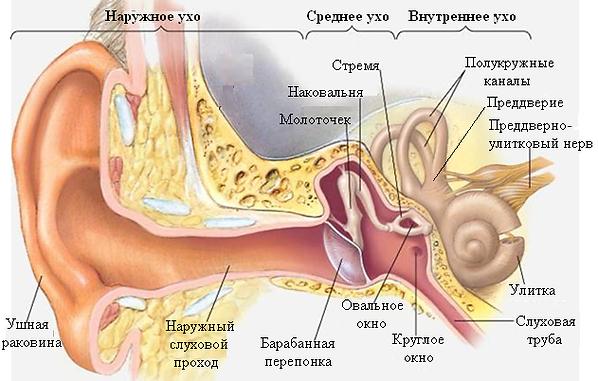 ЛОР и остеопатия