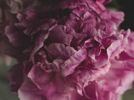 Peonies—Their Spiritual Properties and Why We're So Obsessed with Them