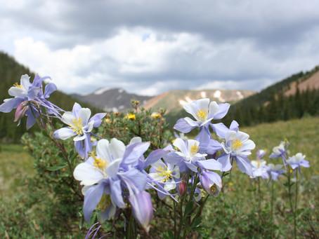 The Spiritual Properties of Columbine—Your GPS System for Navigating Life