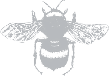 Busy Bee_transparent-01.png