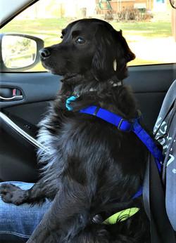 Buddy - CAR RIDE!!