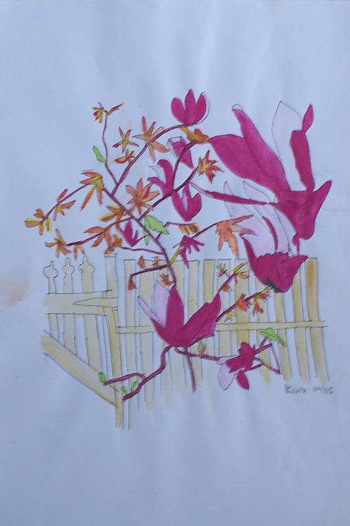 Leura Magnolias