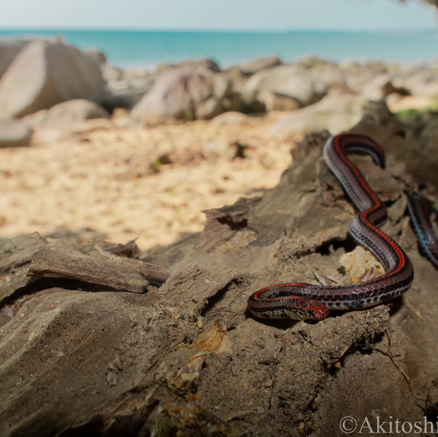 青い海、赤い蛇